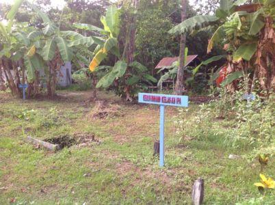 Kebun Binaan Siswa (menanam Rosela)